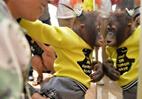 网红猩猩逛商场