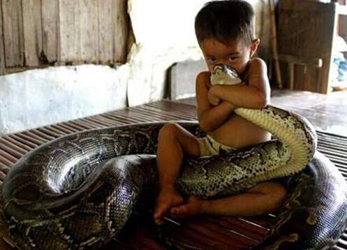 自小和巨蟒睡一起