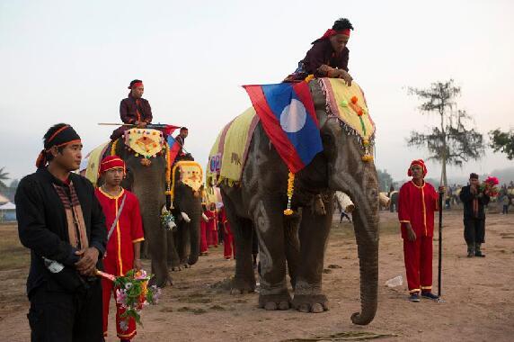 大象节上的象表演